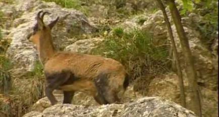 Embedded thumbnail for Video Parco Naturale Regionale delle Alpi Liguri