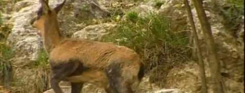 Embedded thumbnail for Video Regional Natural Park of the Ligurian Alps