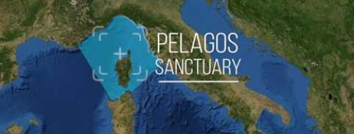 Embedded thumbnail for Video The Pelagos Sanctuary