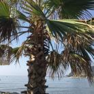 Golfo Dianese (Ph: Carmen Cabano)