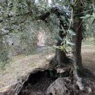 Fiori e natura a Diano Marina (Ph: Provincia di Savona)