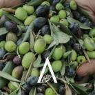 Aromatica 2020 - Profumi e Sapori della Riviera Ligure
